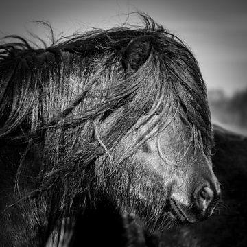 Pony zwart wit van Jeroen Mikkers