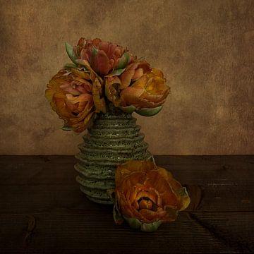 Lilium Tulpen