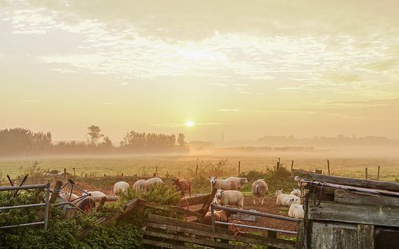 Schapen in de mist van Dirk van Egmond