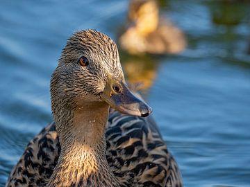 Mutter Ente mit Nachwuchs von Ed Steenhoek