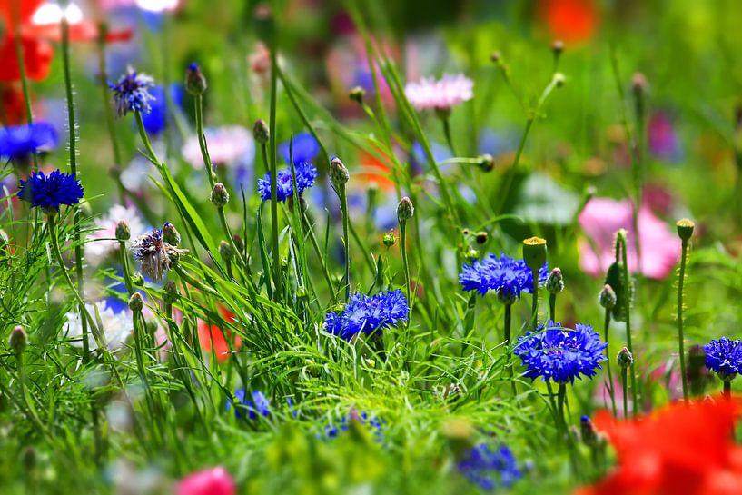 bloemenweide van fotoping