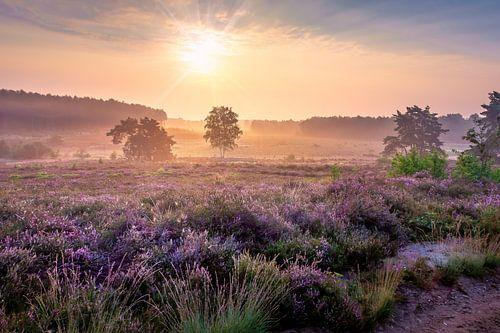 Morgensonne auf der Heide der Teut