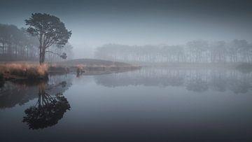 Stille und Ruhe in einem nebligen Fen von Michel Seelen