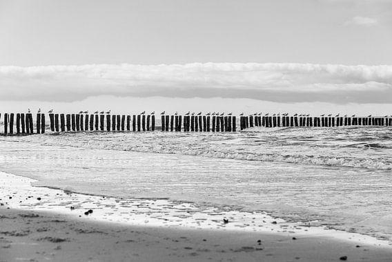 Meeuwen langs het strand