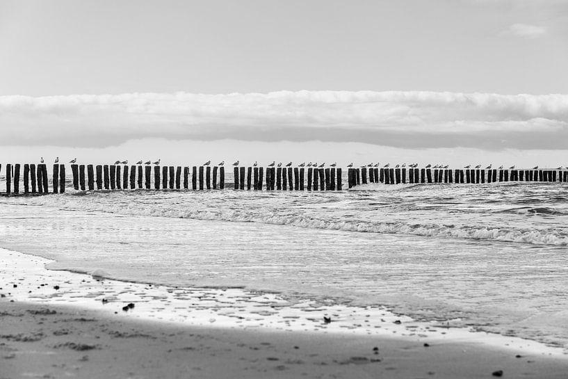 Meeuwen langs het strand van Mister Moret Photography
