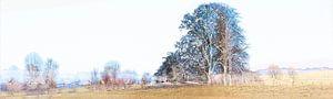 panorama uiterwaarden in winter van
