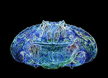 Frog Fantasy von Roderick van de Berg