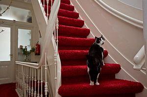 Kat op trap in herenhuis