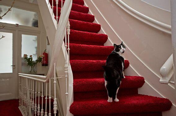 Kat op trap in herenhuis van Robert van Willigenburg