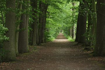 Pad in het bos van Nienke van den Brink