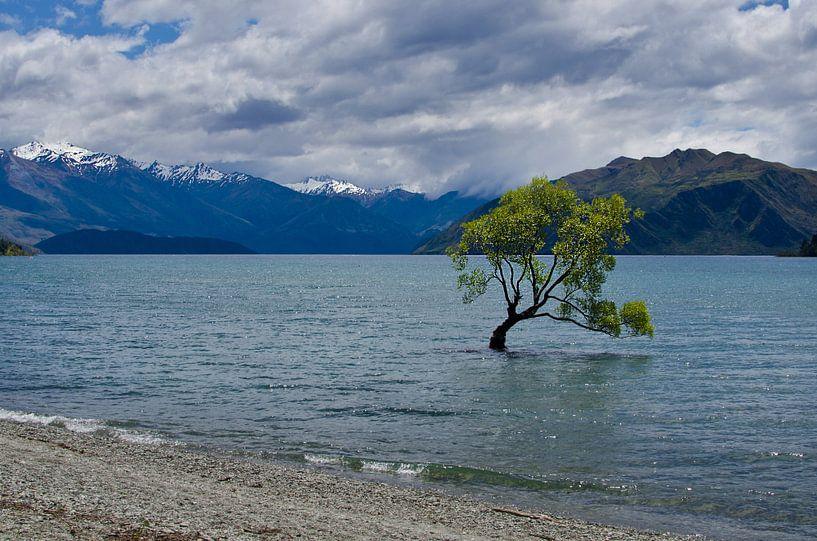 The lonely tree of Wanaka - Nieuw Zeeland van Ricardo Bouman
