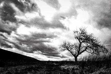 Landschaft mit Baum von Gert Stockmans