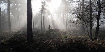 licht in duisternis van Gerard Hol