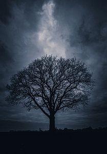 Lone Tree Twickel van Jeroen te Lindert