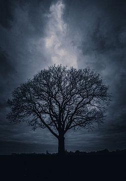 Einsamer Baum Twickel von Jeroen te Lindert
