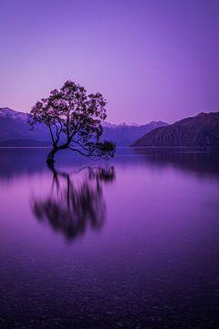 Wanaka Baum am Abend von Rick Willeme