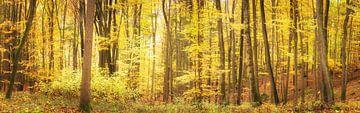 Leuchtender Herbstwald im Panorama von Tobias Luxberg