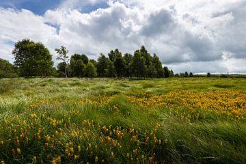 Landschaft mit Wildblumen im Hohen Venn von Belgien von OCEANVOLTA