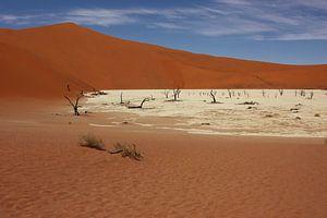 NAMIBIA ... Deadvlei IV van