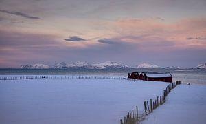 Stallen in de sneeuw