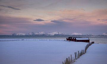 Stallen in de sneeuw van Abe Maaijen
