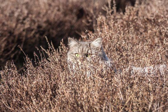 Sluipende Kat op de Hei