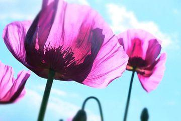 Blütezeit von Andreas Kilian