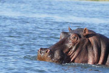 Nijlpaard van Peter Polling
