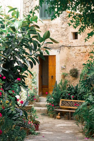 Fleurs et plantes à Valldemossa