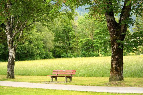 Bankje in het park van