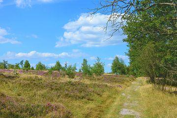 Moorland Walk van Gisela Scheffbuch