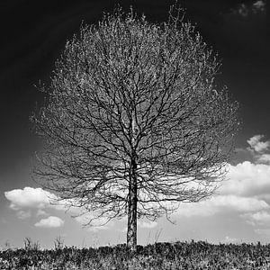 Baum im Profil S/W