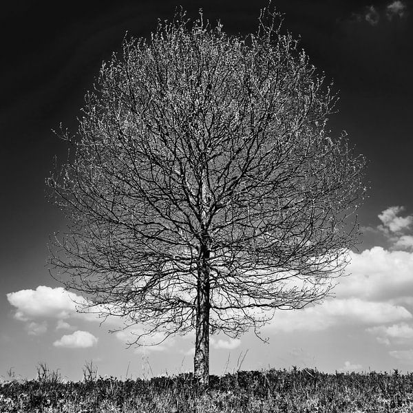 Baum im Profil S/W von Bastiaan Vogel