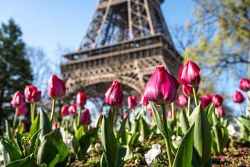 Tulpen voor de Eiffeltoren in Parijs van Peter Schickert