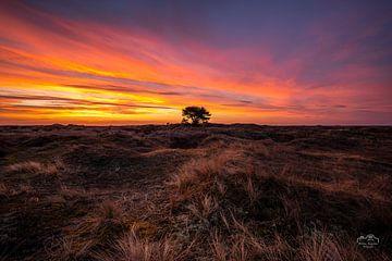 Sonnenaufgang Ameland von Martien Hoogebeen Fotografie