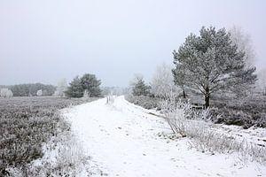 Moorland in Winter II