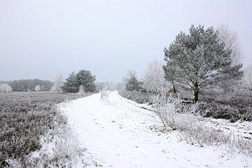 Winter im Heideland - Variante von Gisela Scheffbuch