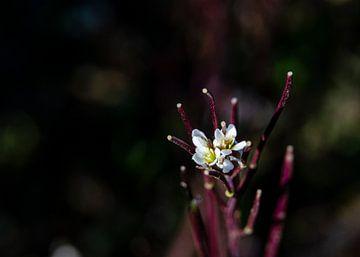 Wakker worden in de lente van Douwe Beckmann