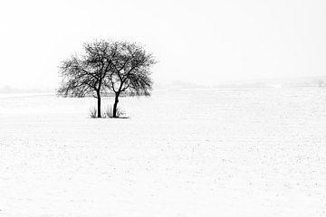 Zwillinge im Schnee von Guy Lambrechts