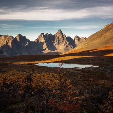 Gold des Yukon, Kanada von Tomas van der Weijden