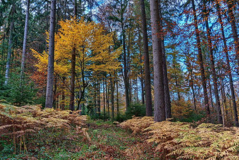 Farbenfroher Herbstwald von Uwe Ulrich Grün