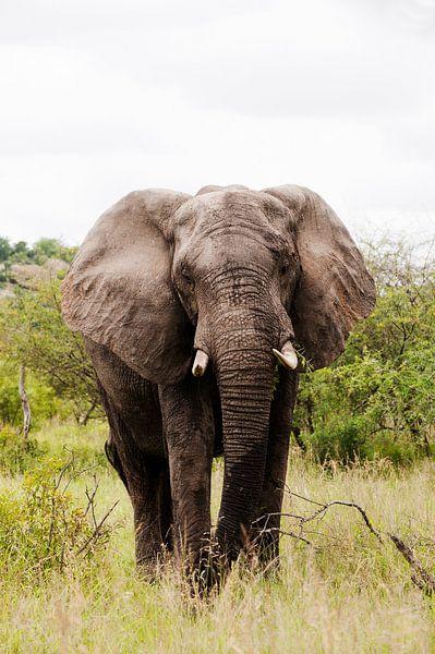 De stille reus - Mannetjes olifant  van Lotje Hondius