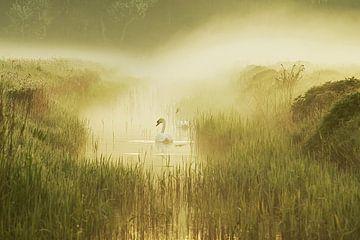 mistig landschap met opkomende zon met zwanen in een sloot von