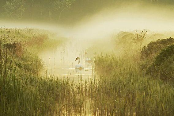 mistig landschap met opkomende zon met zwanen in een sloot van Dirk van Egmond