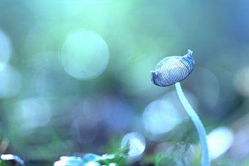 Pilz in der Hintergrundbeleuchtung von Yvonne van Leeuwen