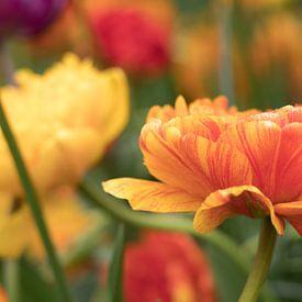 Oranje tulpen   Keukenhof van Marianne Twijnstra-Gerrits