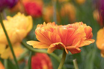 Tulipes orange | Keukenhof sur Marianne Twijnstra-Gerrits