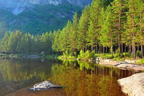 Wald in Norwegen von Rogier Vermeulen