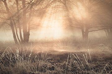 Winter op de Gasterse Duinen met mooi licht en mist van Bas Meelker