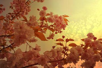 Blütenmeer van zwergl 0611